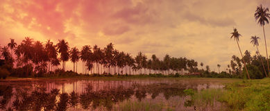 Colorful tropical landscape with twilight sky and palm trees ref Royalty Free Stock Images