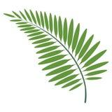 Colorful tropical leaf icon. Vector illustration design stock illustration