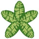 Colorful tropical leaf icon. Vector illustration design royalty free illustration