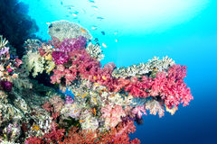 Colorful tropical reef Royalty Free Stock Images