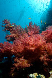 Colorful tropical reef and floral soft corals Royalty Free Stock Photo