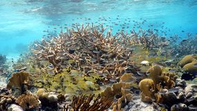 A colorful tropical reef. With a great diversity of marine life royalty free stock photos