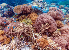 Colorful Tropical Reef Landscape Stock Photo