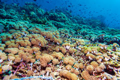 Colorful Tropical Reef Landscape Royalty Free Stock Photo