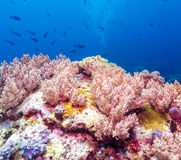 Colorful Tropical Reef Landscape Royalty Free Stock Photos