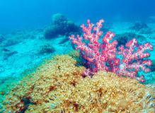 Colorful Tropical Reef Landscape Stock Images