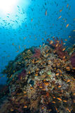 Colorful tropical reef, Red Sea, Egypt Stock Photo