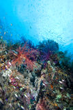 Colorful tropical reef scene Royalty Free Stock Photography