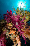 Colorful tropical reef scene with floral corals Royalty Free Stock Images
