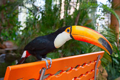 Colorful tucan Stock Photo