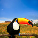 Colorful tucan in the aviary Stock Image