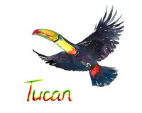 Colorful Tucan flying isolated on white. Colorful Tucan flying, isolated hand painted watercolor illustration with handwritten inscription Stock Photos