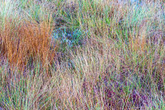 Colorful tufts of grass Royalty Free Stock Images