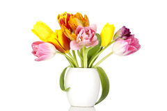 Colorful tulip stock photo