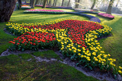 Colorful tulip beds Stock Images