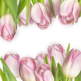 Colorful tulip blooms card. EPS 10 Royalty Free Stock Photos