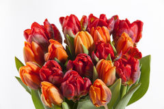 Colorful Tulip bouquet:GN. Tulip bouquet islolated over a white background.GN royalty free stock photography