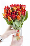 Colorful Tulip bouquet:GN. Tulip bouquet islolated over a white background.GN royalty free stock photo
