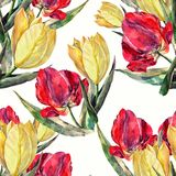 Watercolor red and yellow tulips. Floral seamless pattern. Colorful tulip flower background hand illustration watercolor plants seamless pattern floral bouquet Royalty Free Stock Image