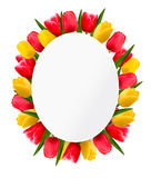 Colorful tulip flowers background. Happy mothers day. Vector illustration Stock Images