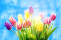 Colorful tulip flowers on a blue background with a copy space for a text. Top of view. Blue sky background. Valentines gift and ce royalty free stock photos