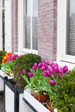 Colorful tulip flowers, facade decoration. Colorful tulip flowers, decoration of an old house facade in Amsterdam, Netherlands. Vertical photo Stock Image