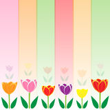 Colorful tulip vector background Stock Photography