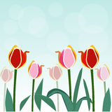Colorful tulip vector background Stock Images