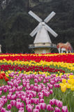 Colorful tulip and windmills Royalty Free Stock Image