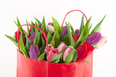 Colorful tulips. In pink purple and red Stock Images