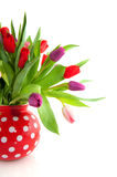 Colorful tulips. In pink purple and red Royalty Free Stock Photography