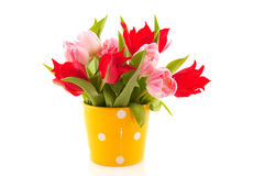 Colorful tulips. Colorful easter tulips in pink and red with yellow pot Stock Images
