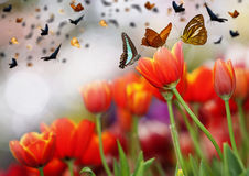 Colorful tulips. And many colors butterfly Royalty Free Stock Photography