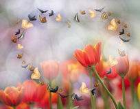 Colorful tulips. And many colors butterfly Royalty Free Stock Photos