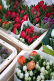 Colorful tulips in Amsterdam Royalty Free Stock Image