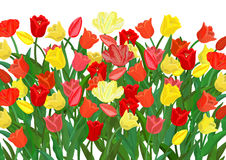 Colorful tulips background Royalty Free Stock Photography