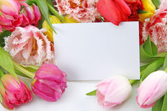Colorful tulips with blank note Stock Image