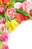 Colorful tulips with blank note Stock Photo