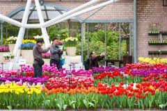 Colorful tulips blossom in dutch spring garden Keukenhof, Lisse, Netherlands Royalty Free Stock Photo