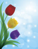 Colorful Tulips Blue Bokeh Background Illustration. Colorful Tulips Bouquet Flowers for Mothers Day or Easter Illustration on Blue Sky Bokeh Background Royalty Free Stock Images