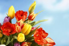 Colorful tulips on blue sky background. Colorful tulips on a blue sky background Royalty Free Stock Images
