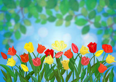 Colorful tulips border Royalty Free Stock Photography