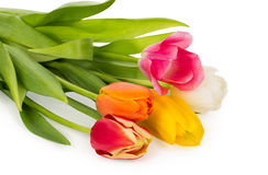 Colorful tulips bouquet Royalty Free Stock Image