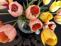 Colorful tulips bouquet at the glass table royalty free stock images