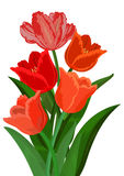 Colorful tulips bouquet Royalty Free Stock Photography