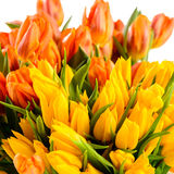 Colorful tulips bunch of spring flowers Royalty Free Stock Photo