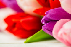 Colorful tulips royalty free stock photos