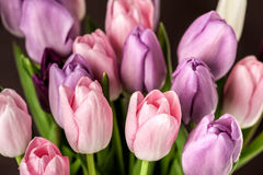 Colorful tulips close-up Royalty Free Stock Images