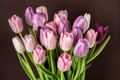 Colorful tulips close-up Stock Photography
