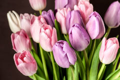 Colorful tulips close-up Stock Image